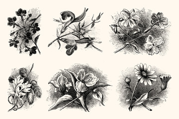 Vintage Botanical Illustrations - Hand Engraved Vintage Floral Line Artwork