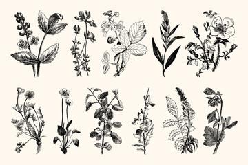 Vintage Flowers and Plants - Hand Engraved Vintage Botanical Line Artwork