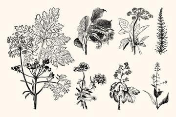 Vintage Botanical Illustrations - Hand Engraved Vintage Floral Line Artwork