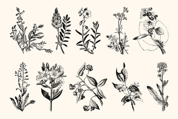 Vintage Flowers and Plants - Hand Engraved Vintage Botanical Line Artwork