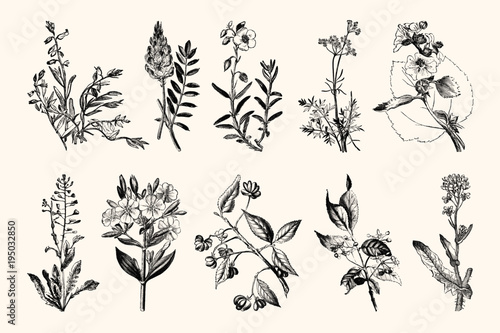 Vintage Flowers and Plants - Hand Engraved Vintage Botanical Line