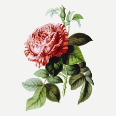 Vintage drawing of flower. Vector illustration.