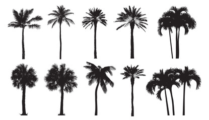 Tropical coconut palm, different natural varieties of trees. 