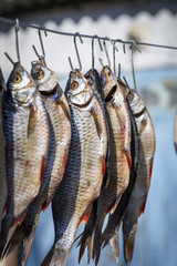 salted river fish hung on hooks