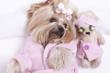 Yorkie and Teddy Bear Friend at the Beauty Salon Spa