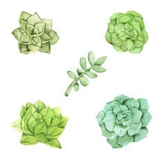 Green succutents set isolated on white background. Hand drawn watercolor illustration.