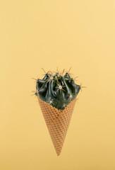 Cactus in the cornet