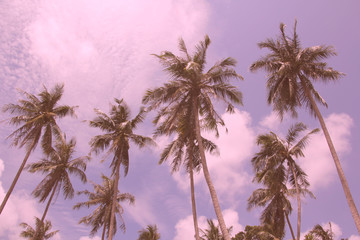palm trees are in the tropics. palm grove. sunny day.