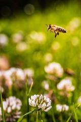 Bee collecting flower pollen