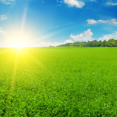 Green field and sun rise in the blue sky.