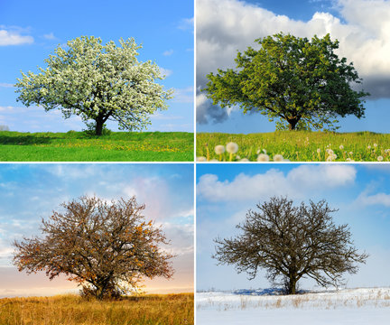 Alone tree in four season