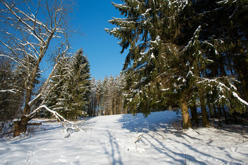 beautiful winter day in forest