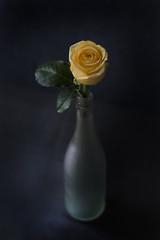 Single Yellow Rose in Vase