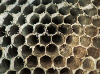 Wasp Nest Honeycomb Pattern