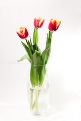 bouquet of red tulips in a vase on a white background gift for a girl on March 8 international female day