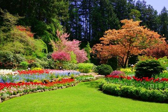 Butchart Gardens, Victoria, Canada. Vibrant spring colors of the sunken garden.