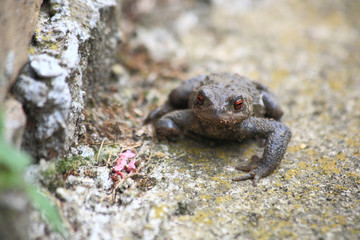 Toad on the rock