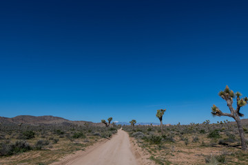 Wall Mural - Vast Blue Sky Over Joshua Tree