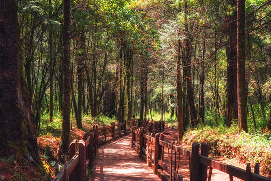 Monarch Butterfly Biosphere Reserve