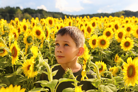 cute child in sunflowers looking up. boy on the field of blooming sunflowers