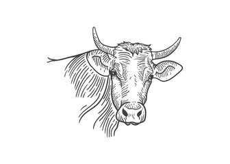 Cow line art vector illustration