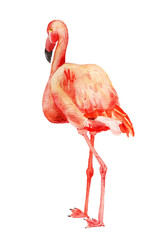 Watercolor image of flamingo
