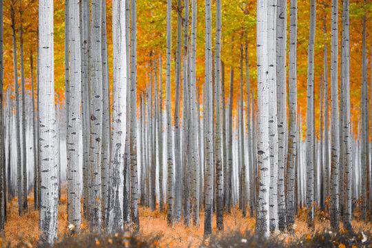 Fall Forest Scene