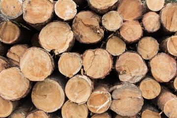 Keuken foto achterwand Brandhout textuur Log ends background, pine wood cross sections