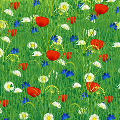 Summer meadow with herbs and flowers