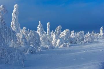 Majestic winter trees