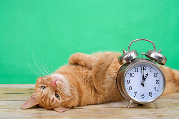 Orange ginger tabby cat laying on a wood table upside down paws in the air, green background next to an old fashioned alarm clock set to 1 o'clock AM. Daylight Savings. Spring forward. Fall back.