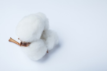 Fluffy cotton ball isolated on white background. empty space for text.