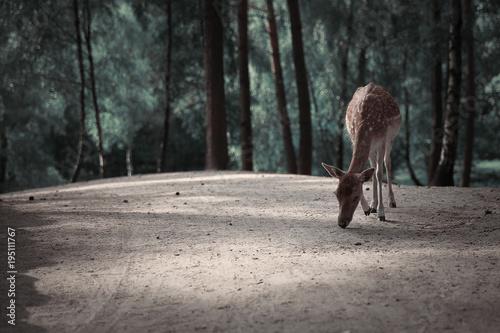Image of red deer in Autumn forest landscape