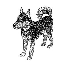 Husky dog isometric, black and white, isolated