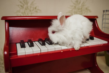 white rabbit is sitting on the piano