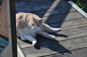 野良猫 猫 かわいい