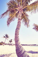 Vintage toned close up picture of coconut palm on a beach, summer holiday concept.
