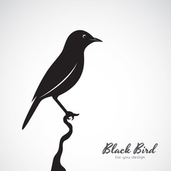 Vector of a black bird on white background. Animal. Easy editable layered vector illustration.