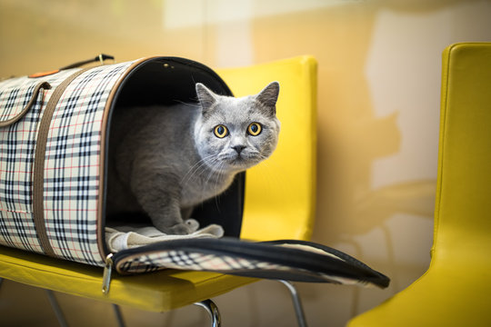 Cat in a veterinary clinic. Feline patient waiting in the waiting room of a vet clinic
