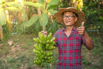 Asian farmer holding green banana on farmland