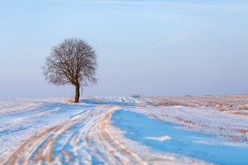 Winter landscape with single tree