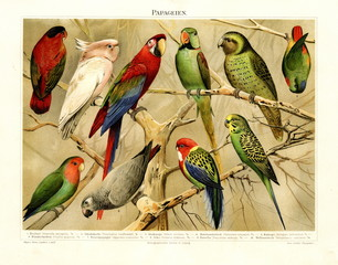 Parrots (from Meyers Lexikon, 1896, 13/478/ 479)