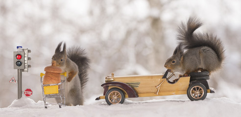 red squirrels with traffic light and car