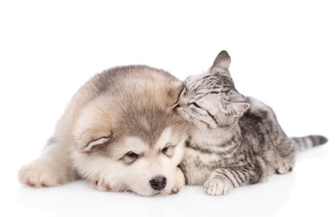 cat sniffs the dog's ear. isolated on white background
