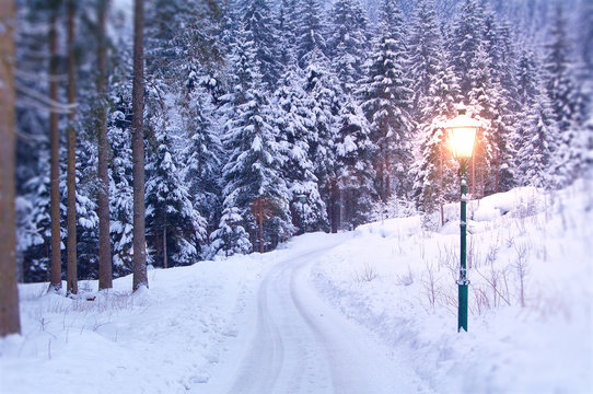Lamp Post in Winter