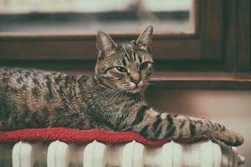 Beautiful cat lying down on radiator by the window.