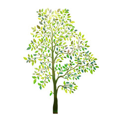 Tree with green leaves isolated on white background vector