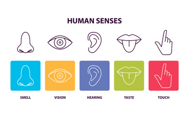 Human Senses Informative Poster with Body Parts