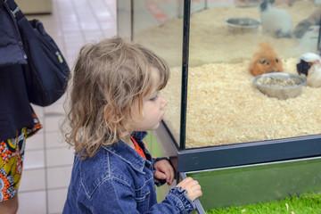 fillette choisissant son animal de compagnie