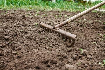 On the soil lie the garden rake. Close-up, Concept of gardening